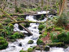 (elodiemuhlach) Tags: nature cascade hohwald alsace foret promenade eau photographie photo lumix panasonic dmc gf7 pierre roche riviere ruisseau paysage france