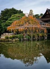 Heian-jingū pond (Tigra K) Tags: kyōtoshi kyōtofu japan jp kyoto kyotoprefecture 2012 architecture garden lake lattice nature reflection repetition tree