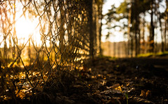 Friday (--Conrad-N--) Tags: forest fence flickr friday low sunset sony a7rm2 plants perspective landscape za zeiss