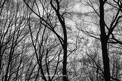 Early in Black and White (Photographybyjw) Tags: early black white clouds stark trees make this bit surreal partly sunny day north carolina photographybyjw morning rural country foliage