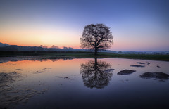 """ TRANQUILITY"" (Wiffsmiff23) Tags: lonetree longexposure southwales reflections reflection tranquil puddle field sunrise"