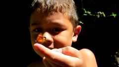 O menino e os bichinhos (Antonio_Dourado) Tags: digital canon canonsx50hs canonpowershotsx50hs canonsx50 canonpowershotsx50 canonpowershot butterfly borboleta menino boy kid kids lumiar riodejaneiro brasil brazil novafriburgo