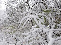 IMG_2836 (sjj62) Tags: s90 snow snowscape lith lakeinthehillsil winter winterscape