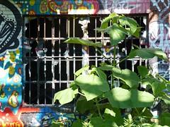 rv94 (daily observer) Tags: graffiti philadelphiagraffiti abandonedphiladelphia philadelphia readingviaduct overgrown