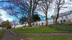 Bon Accord Terrace Gardens, Aberdeen, March 2017 (allanmaciver) Tags: bon accord terrace gardens aberdeen granite city centre north east grampian weather blue clouds sunshine showers allanmaciver