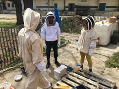 April 23: Bee homecoming!