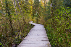 Spring Time Forest Walk (jadennyberg) Tags: park forest boardwalk lynncanyon northvancouver vancouver hiking green lush spring