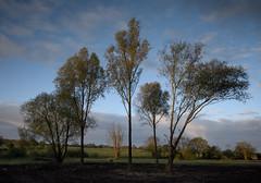 trees (explored) (Lee Woodcraft) Tags: trees boreham essex nikon d7200
