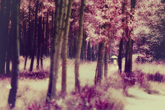 """""""Afternoon walk under the umbrella..."""" (Ilargia64) Tags: walk walking womanwithumbrella forest nature landscape pink light trees loneliness fineart"""