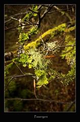passengers (tiggerpics2010) Tags: scotland nature westhighlands woodland moss mossy trees growth life green river