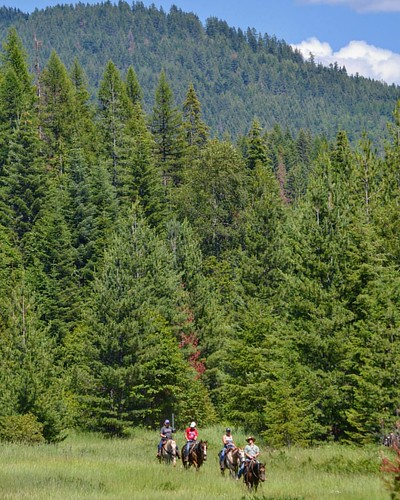 Idaho has 20.4 million acres of national forest land which is nearly 40% of Idaho's land mass. 2.5 million acres encompass the Panhandle National Forest. In addition to our own 1100 acres, Western Pleasure Guest Ranch borders these forests. With approxima