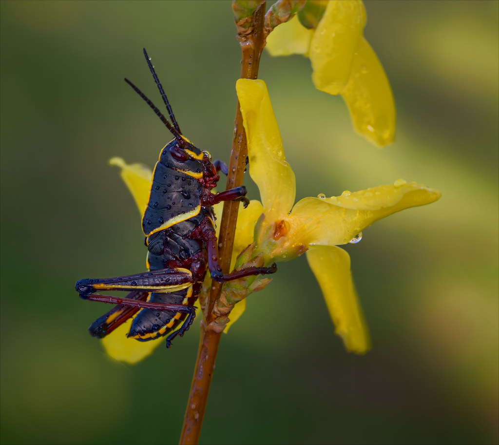 Insects R Gone The World's...