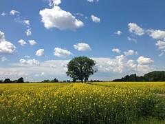 iph501 (gzammarchi) Tags: italia paesaggio natura pianura campagna ravenna borgomontone fiore colza nuvola