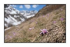 Printemps en Avérole (Pierre_Bn) Tags: savoie savoy maurienne montagne mountain mountains alpes alps frenchalps fuji xt2 fujixt2