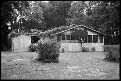 This house has a green thumb. And roof. (FreezerOfPhotons) Tags: leicam4p jupiter850mmf2 neopan100 legacyprofujifilmneopanacros100 xtol abandoned abandonedhouse vines overgrown roofcavedin notcaredfor wood concreteblock grass bush trees