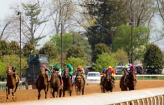 Still Going (Casey Laughter Media) Tags: racehorse horseracing thoroughbred gallop horse horses keeneland racing racetrack lexington kentucky