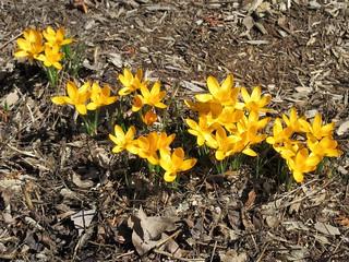 ** Fleurs jaunes **