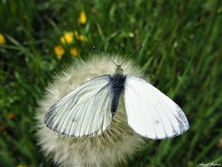 Butterfly 1214
