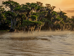 Misty morn (Ed Rosack) Tags: cypress usa dawn landscape tree sky nature water fog bluecypresslake centralflorida lake mist ©edrosack florida verobeach