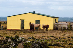 Explore Iceland (Simona Solombrino) Tags: iceland travel explore exploring nordic lights horses icelandic journey nature natural wild wildlife photography photpgrapher wonderlost waterfall