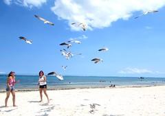 Seagulls are fun (thomasgorman1) Tags: beach sky sand sea ocean seagulls gulls birds people women mexico caribbean