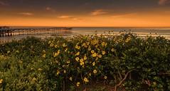 Morning at Crystal Pier (John A. McCrae) Tags: crystalpier pier pacificbeach pacificocean sandiego seaside coast ocean california sunrise