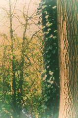 Weekday Wander (Clive Varley) Tags: preston trees nikcolorefexpro