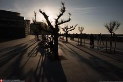 shadows (Oneras) Tags: sooc d810 shadows sombras donostia sansebastián zurriola playa beach paseo trees árboles atardecer dusk