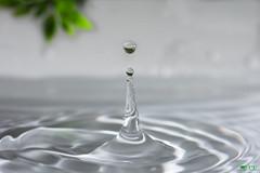 ''Source de vie!'' (pascaleforest) Tags: eau water goutte macro passion nikon sigma nature vie life vert green plante macrophotographie