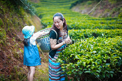 Mother and daughter (MPBHAIBO) Tags: china plant green nature colors field hat female season landscape outdoors spring clothing women asia adult farm yangshuo working crop plantation ethnic job groupofpeople picking scenics strawhat ethnicity traditionalculture concepts lifestyles headwear harvesting tranquilscene occupation eastasia chineseculture landscaped naturalphenomenon traditionalclothing physicalactivity ruralscene terracedfield nonurbanscene chinesetradition asianculture teapicking southeastchina cultivatedland asianethnicity chineseethnicity manualworker asiapac manmadespace teacrop eastasianethnicity humanage agriculturalactivity asianandindianethnicities movingactivity guangxiregion