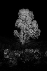 Esk Valley Tree (damo.photo) Tags: park portrait white black tree monochrome up leaves stone wall night landscape long exposure image wind time branches yorkshire north dry windy nobody illuminated national photograph bark valley trunk moors lichen lit waving vignette vally esk