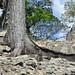 Molti alberi sono cresciuti in mezzo alle rovine