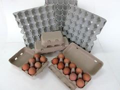 แผงไข่กระดาษ ถาดไข่กระดาษ pulp mold eggtray-9