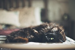 Cody (Rick Nunn) Tags: boy black cute cat bed kitten sleep room rick nunn canonef50mmf14usm