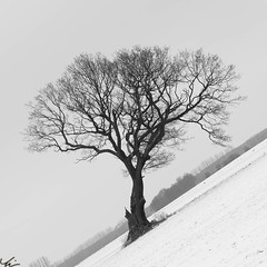 120212_Elbe_0082-292 (Thorsten L) Tags: flickr picasa elbe 2012 facebook