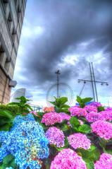 Ferris wheel & Hydrangea (Hiro01557) Tags: sky cloud hydrangea yokohama hdr cosmoclock