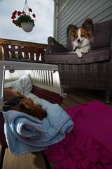 Manu and Lulu (Juhpa) Tags: dogs flash papillon russiantoy