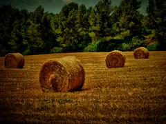 Harvest. Segarra (Perrimoon) Tags: harvest catalonia textures hdr mygearandme