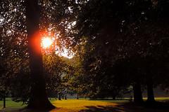 Meise - Peeping Sun (Drriss & Marrionn) Tags: park flowers trees sunlight landscape flora europe belgium conservatory greenery botanicalgarden meise nationalbotanicgardenofbelgium