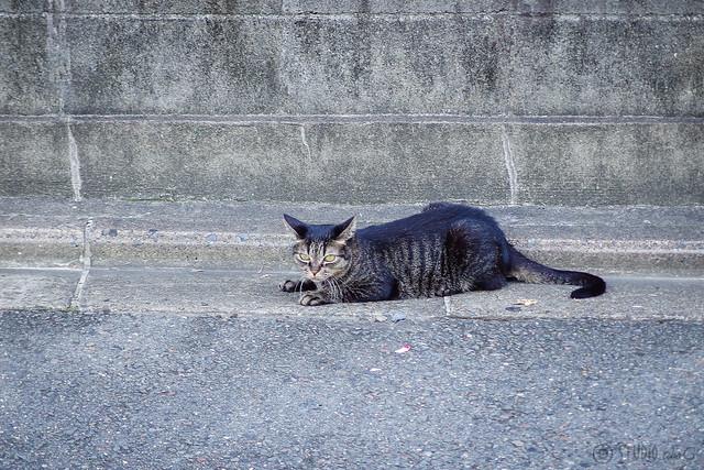Today's Cat@2013-09-21