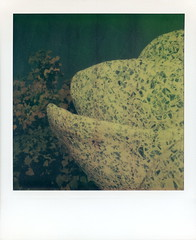 A Rose For Lilly (tobysx70) Tags: polaroid sx70 timezero artistictz artistic tz atz the impossible project tip a rose for lilly walt disney concert hall gardens south grand avenue dtla downtown los angeles la california ca lillian fountain broken royal delft china philharmonic phil stainless steel frank gehry community park toby hancock photography