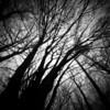 Zero2000 R2 F1 - Red Quar Forest (Adam Clutterbuck) Tags: trees blackandwhite bw 6x6 film forest square mono exposure somerset pinhole multiple bandw 50 ilford zero2000 zeroimage sixbysix panf greengage adamclutterbuck sqbw bwsq showinrecentset