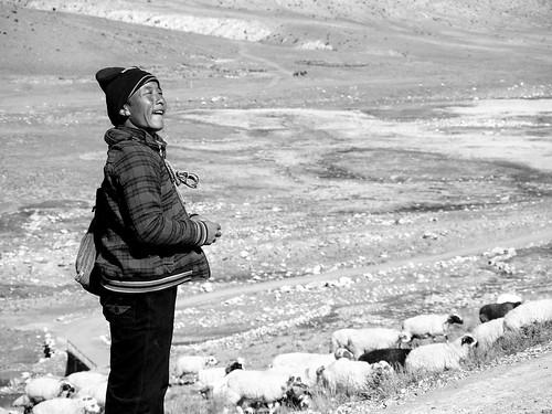 Shepherd, From FlickrPhotos