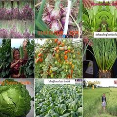 ไฮไลฟ์โกร เอส (ฝาสีเขียว) พระเอกตัวจริงของเกษตรกรตัวจริงมาแล้ว 1. ไม่ใช่สารชีวภาพประเภทจุลินทรีย์หมักหรือสกัดได้จากส่วนของกระดองปูหรือเปลือกกุ้งแต่อย่างใด  2. เป็นเนื้อสารเข้มข้นมีสารอาหารพืชต่างๆครบถ้วนตามที่พืชต้องการรวมอยู่เป็นเนื้อสารเดียวกัน  3. ช่วย