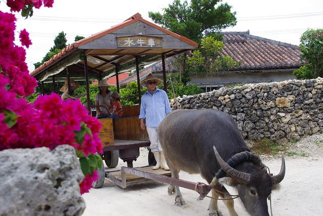 竹富島の水牛車|竹富島