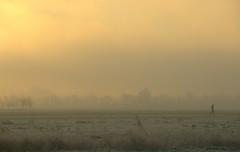 ...runner (Harry Mijland) Tags: morning holland netherlands utrecht nederland running polder dearharry harrymijland cyclingtoworkisbliss