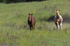 Wild Horses Lincoln National Forest, NM