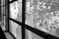 crashing in (lydiafairy) Tags: old school blackandwhite bw tree abandoned broken window bokeh brokenglass shards urbex abandonedschool