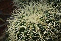 GREEN-WORLD (ddsnet) Tags: cactus plant succulent sony hsinchu taiwan cybershot  cactaceae      peipu greenworld rx10