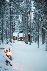 201402_ll_0003 (ffffux) Tags: winter snow ice reindeer fire husky finnland lapland sledge